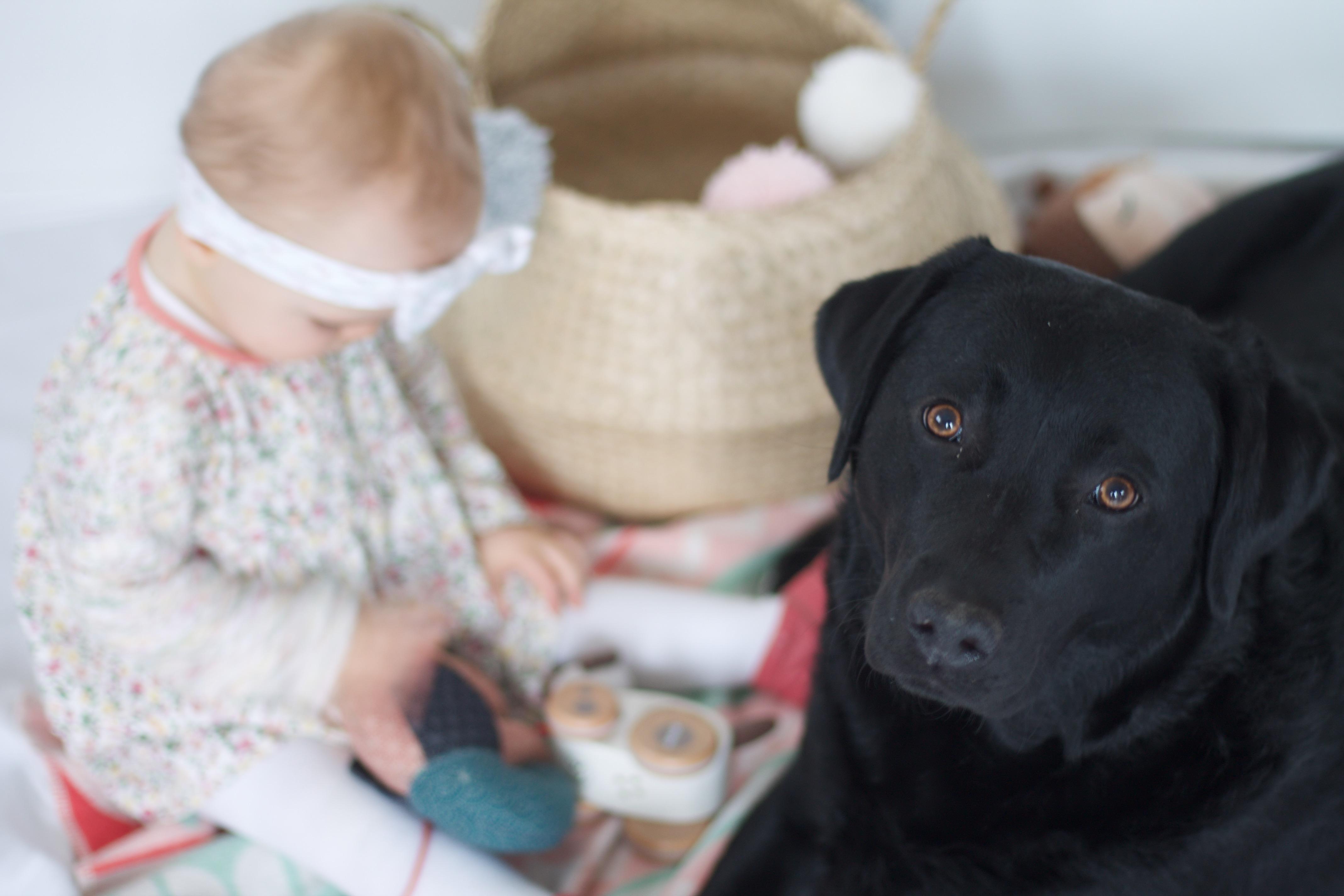 Baby und Hund ein super Team