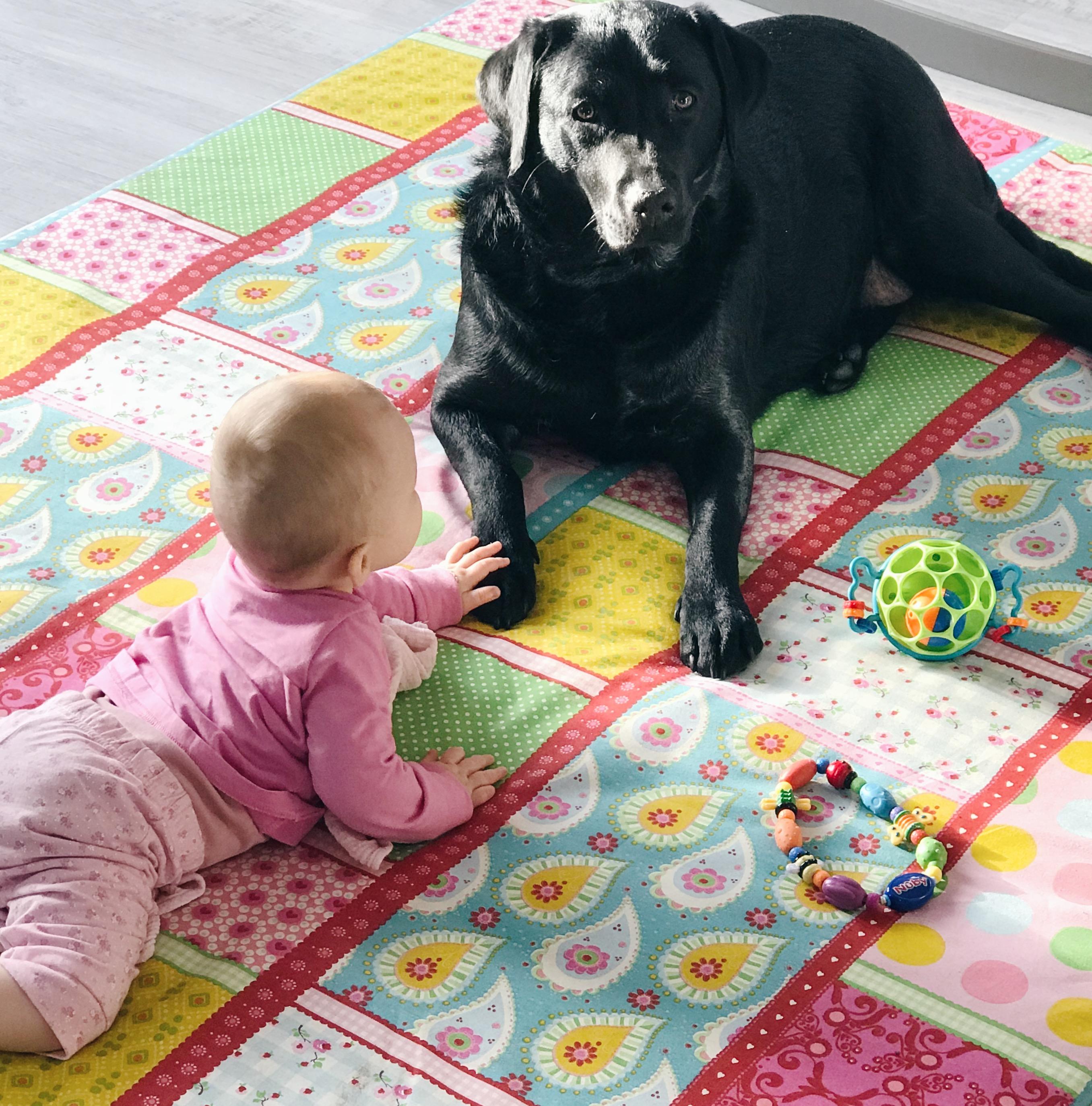 Baby und Hund - unzertrennlich